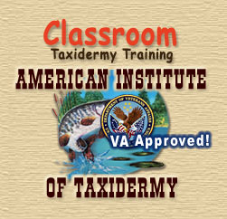Taxidermy Training in the Classroom